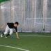 石川県金沢市・かほく市 石川県に新たな野球チーム